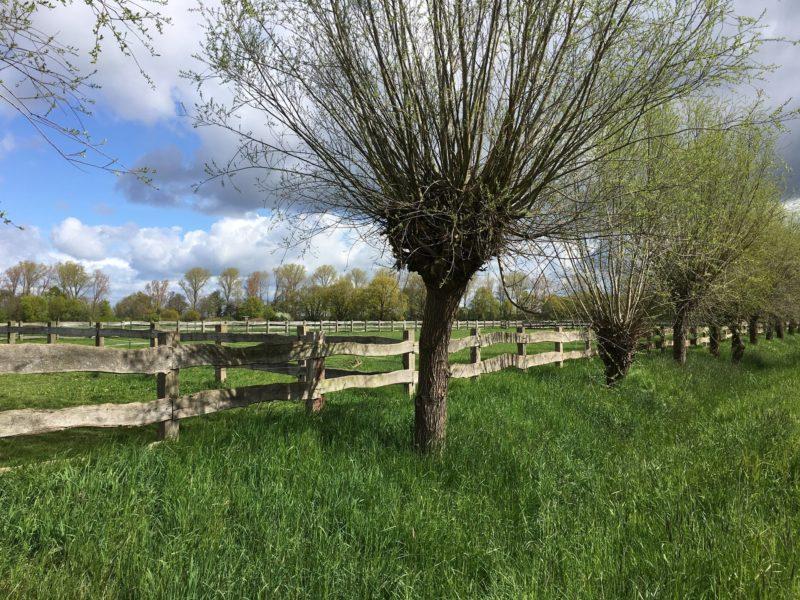 Typisch Niederrheinische Landschaft soll nicht zerstört werden